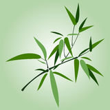 Bamboo branch. Illustration with green bamboo branch on green background royalty free illustration