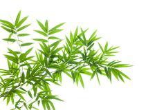 Free Bamboo Branch On White Background Royalty Free Stock Photo - 125215145