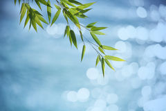 Bamboo branch. Shallow DOF Royalty Free Stock Photography
