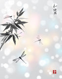 Bamboo branch and three dragonflies Stock Image