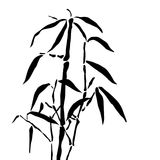 Bamboo branches Royalty Free Stock Image
