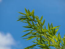 Bamboo branches against a blue sky Royalty Free Stock Photos