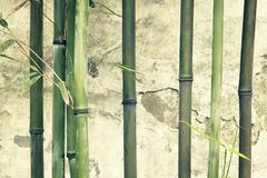 Bamboo branches against old weathered wall. Stock Photos