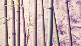 Bamboo branches against old weathered wall. Stock Image