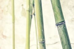 Bamboo branches against old weathered wall. Royalty Free Stock Image