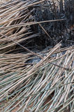 Bamboo branches fallen after burned Royalty Free Stock Photos
