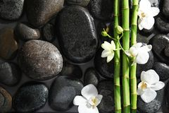 Bamboo branches, flowers and spa stones in water, top view. Space for text royalty free stock photos