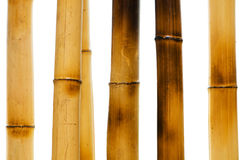 Bamboo branches isolated Stock Photos
