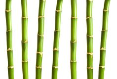 Bamboo branches isolated. On the white background Royalty Free Stock Images