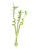 Bamboo branches isolated. On the white background Royalty Free Stock Photo