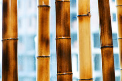 Bamboo branches isolated on the white Stock Photo