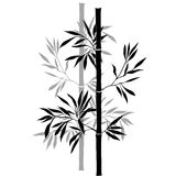 Bamboo branches isolated on the white background. Royalty Free Stock Photography