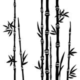 Bamboo branches isolated on the white background.  Stock Photo