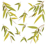 Bamboo branches isolated on white background. Royalty Free Stock Images