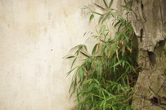 Bamboo branches Royalty Free Stock Images