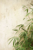 Bamboo branches Stock Photos