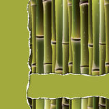 Bamboo branches under the green torn paper. Stock Photography