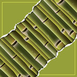 Bamboo branches under the torn paper. Stock Image