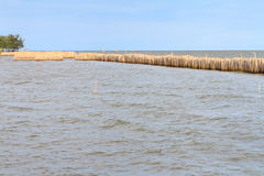 Bamboo breakwater Stock Images