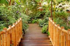 Bamboo Bridge Royalty Free Stock Photo