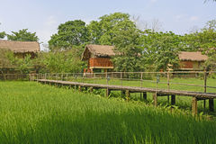 Bamboo Bridge acroos a Rice Paddy Stock Photos