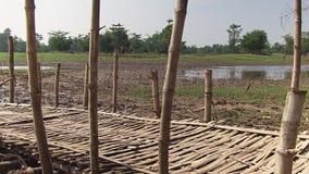 Bamboo bridge stock video