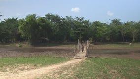 Bamboo, bridge , cambodia, southeast asia stock video footage