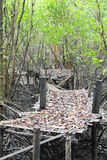 Bamboo bridge collapsed Royalty Free Stock Photo