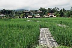 Bamboo bridge,Green field. Bamboo bridge in the green field Stock Images