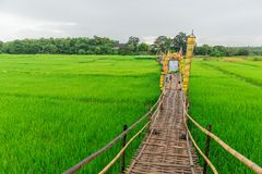 Bamboo bridge on green rice field travel location at Wat Phra That San Don Lampang. Province Thailand Stock Photography
