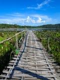 Bamboo bridge through lotus lake with mountain background and bl. Woven bamboo bridge through lotus lake with mountain background and blue sky Stock Images