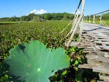 Bamboo bridge through lotus lake with mountain background, blue. Woven bamboo bridge through lush lotus lake with mountain background, blue sky and closeup Royalty Free Stock Photos