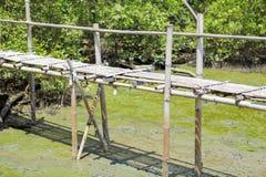 Bamboo bridge Royalty Free Stock Photos