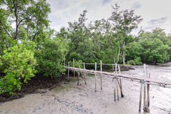 Bamboo bridge nature trail mangrove forest Stock Image