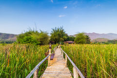 Bamboo bridge near reservoir with mountain and sky view Royalty Free Stock Image