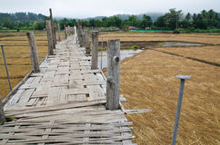Bamboo bridge Stock Images