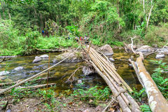 Bamboo bridge over rill in national park forest.  Stock Photo