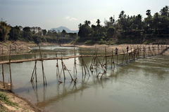 Bamboo bridge over the river. Mekong Stock Images