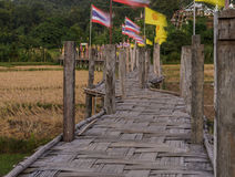 Bamboo bridge pass rice field to the temple Stock Image