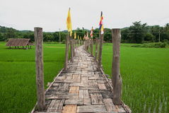Bamboo bridge on rice field Stock Photo