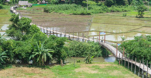 Bamboo bridge rice field. The bamboo and wood bridge pass over the rice field Royalty Free Stock Photography