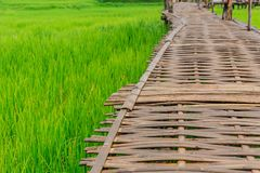 Bamboo bridge walking path on green rice field in Lampan Stock Images