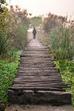 Bamboo bridges stock photo