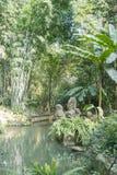 Bamboo and brook stock photos
