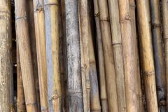 Bamboo Brown. Background bamboo brown wood surface with a straight stem Royalty Free Stock Images