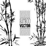 Bamboo bush, ink painting Stock Image