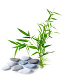 Bamboo bush and rocks Royalty Free Stock Images