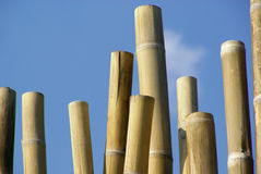Bamboo cane Stock Photography