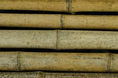 Bamboo cane. Close up Royalty Free Stock Images