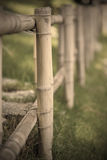 Bamboo Cane Stock Photos